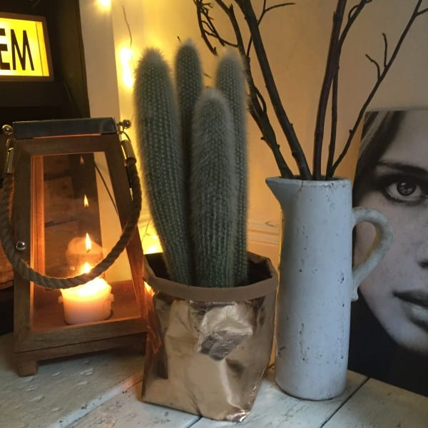 cactus in gold pot, candles and copper lantern
