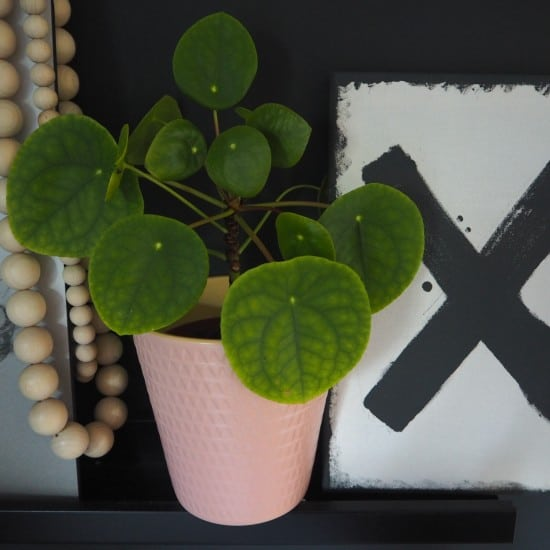 Breathe easier with these 5 easy to care for houseplants.