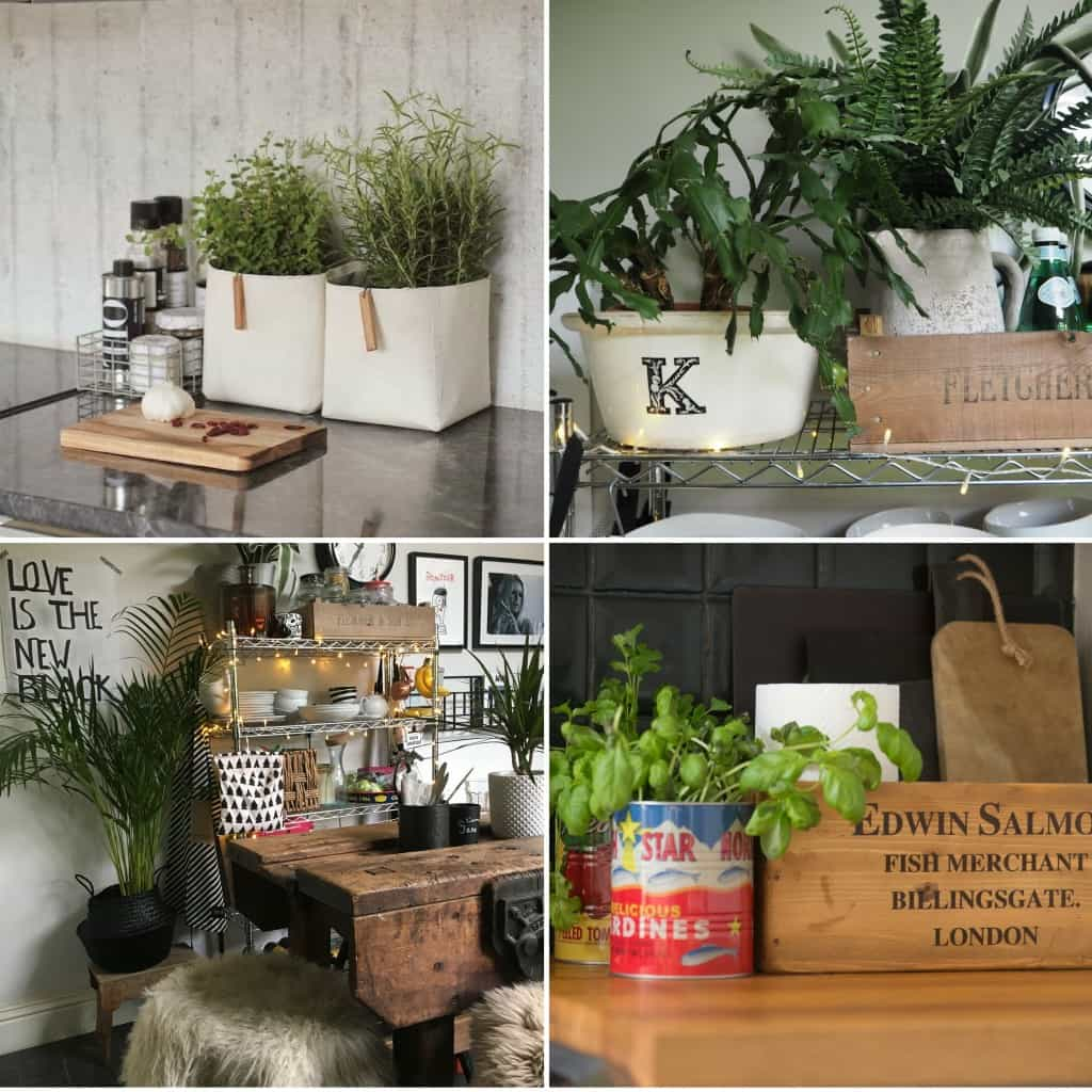 Adding plants to transform a rental kitchen