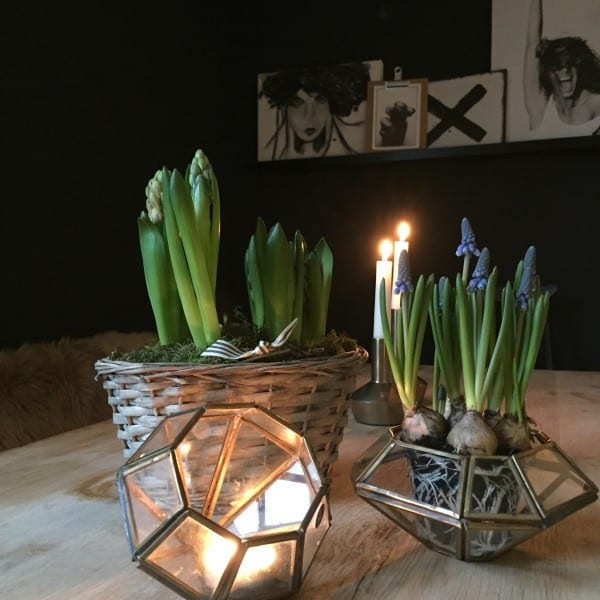 cactus plants and metal geometric candle holders candles