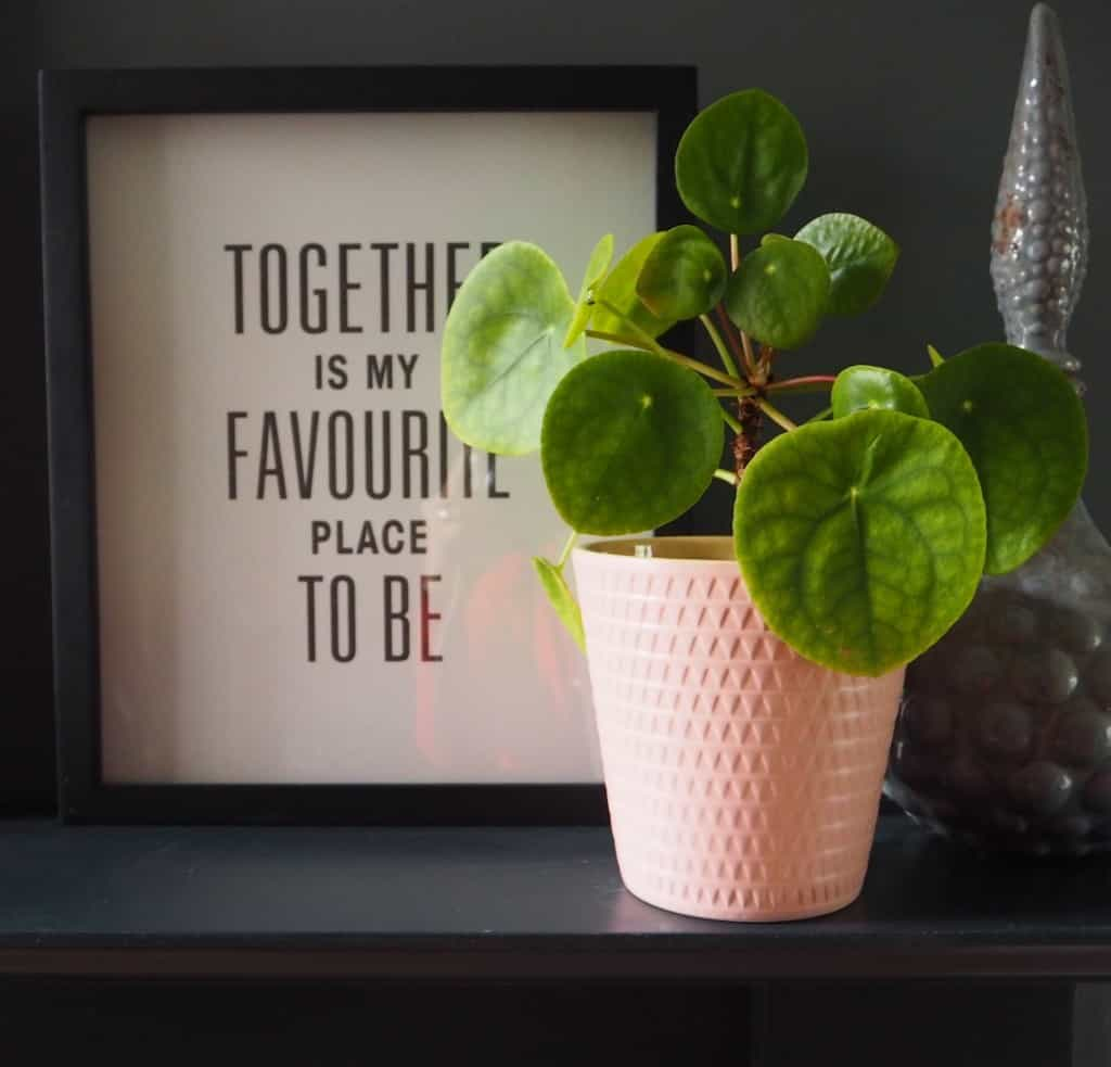 5 easy to care for houseplants, pilea